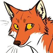 Beautiful orange fox