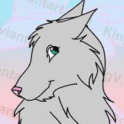 Beautiful grey girl wolf